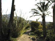 Vista de la huerta de Abanilla